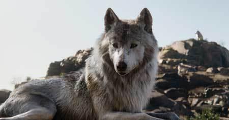 Mother wolf Raksha