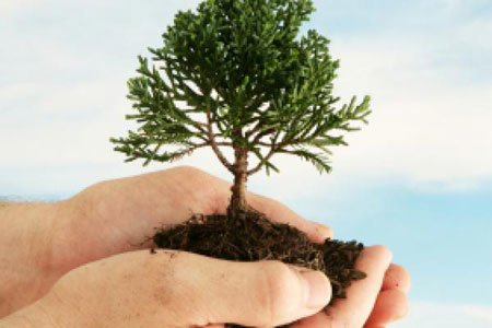 Plant a tree in honor of Arbor Day!