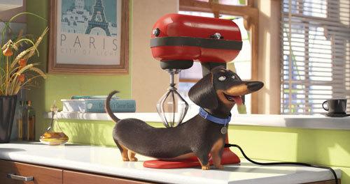 Wiener dog Buddy gets a massage