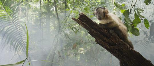 Amazonia Exclusive Trailer