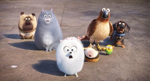 Mel, Chloe, Gidget, Norman, Tiberius, Sweetpea and Buddy