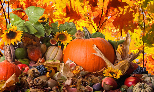 Thanksgiving celebrates the harvest and other blessings of the past year