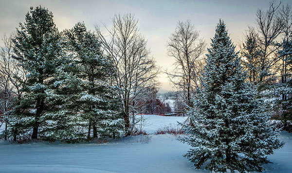 The fir tree has long been a symbol of hope during the winter months.