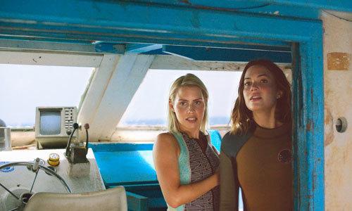 Should we really go shark diving?