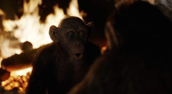 Bad Ape is discovered