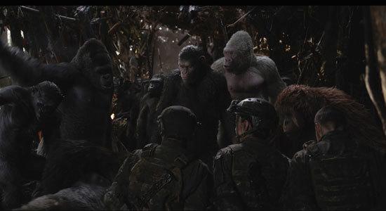 White Ape Winter will betray Caesar