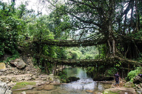 Cherrapunji, India is famous for its live bridges