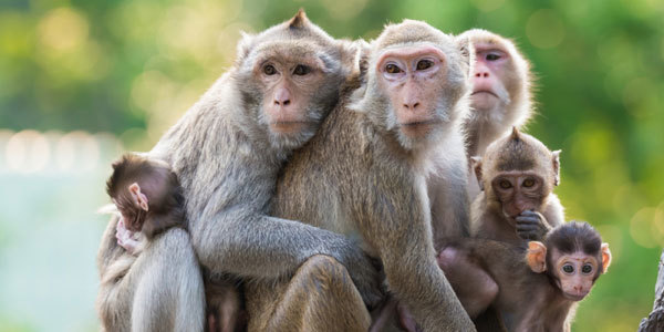 Feature all about monkeys feat
