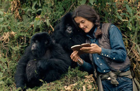 Preview dian fossey womens history pre