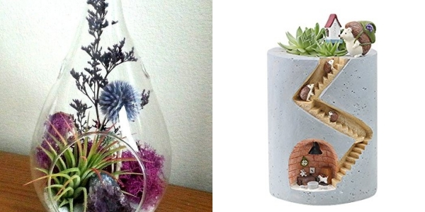Succulent plants are low-maintenance and high on style