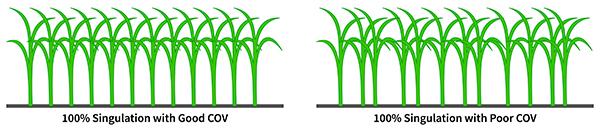 corn2_600.jpg