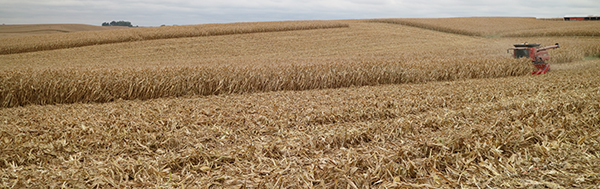 Harvest%20600px.jpg