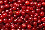 cranberries%20150px.jpg