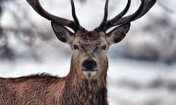 MDC releases alternative methods deer season numbers