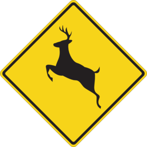 Child injured when car hits deer in Chariton County