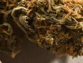Lafayette County arrest turns up marijuana
