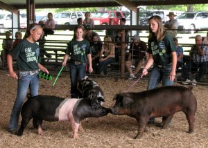 Paityn Hall, Avery Matthews and Abbey Daly show for Grand Champion Gilt