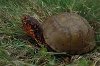 Give Turtles A Brake!