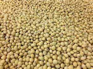 Soybeans rallied dollar higher since beginning of March