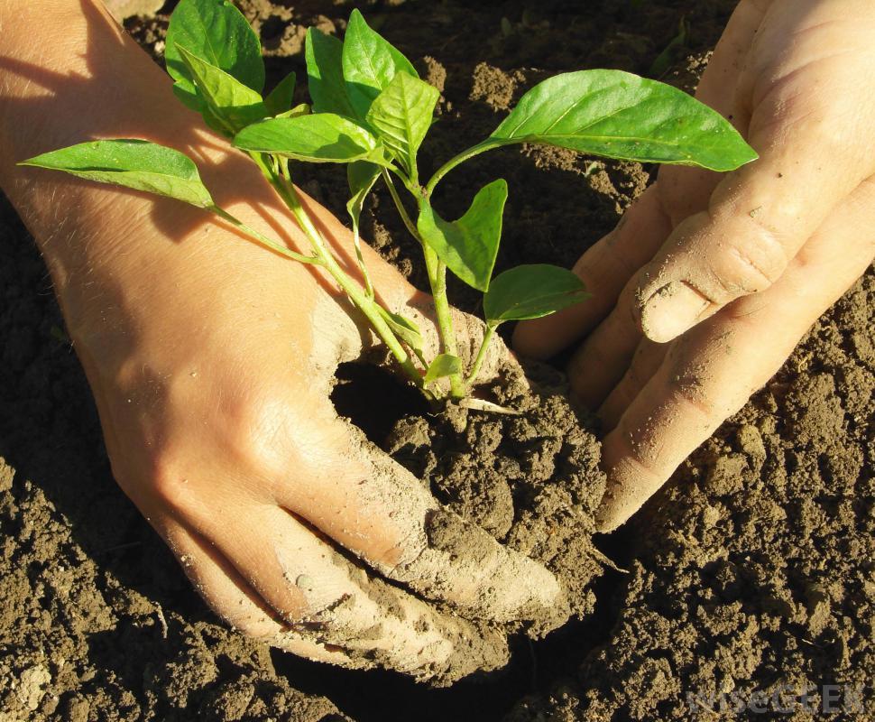 NEWSMAKER – Missouri Master Gardeners go to college