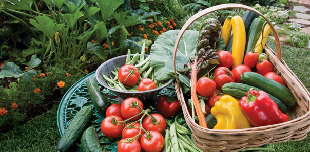 MU Extension provides horticulture tip for garden growers