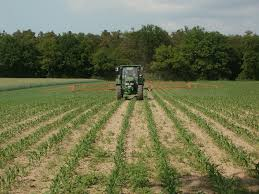 Planting a windbreak can help protect crops and livestock