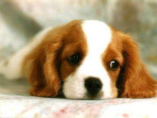 sad_puppy-med.full.jpg