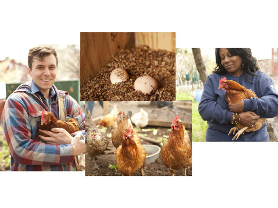 The City Chicken Project Heritage Radio Network