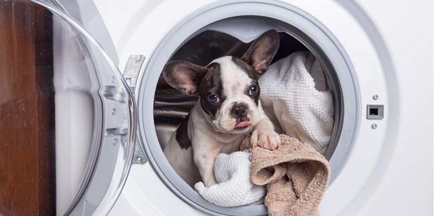 Empresa de Limpeza ecológica TEM Serviços Pará casas COM animais de estimação