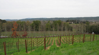 Meyers_Zinfandel_ready_for_spring_replant