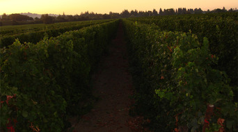 Bevill Sauvignon Blanc at sunrise
