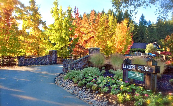 Harvest colors greet your entry to Lambert Bridge