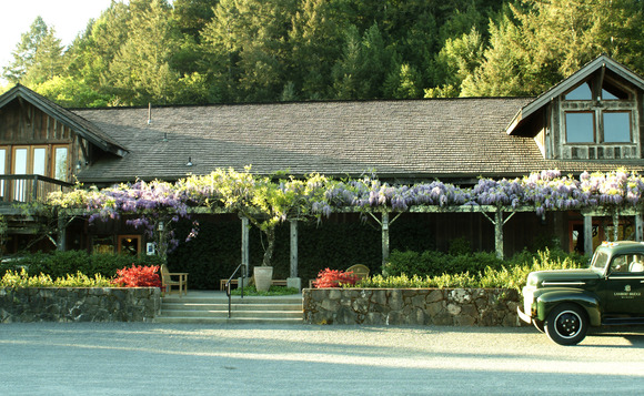 30-year old wisteria and Japanese maples welcome guests to our tasting room