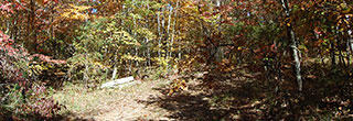 Forested 1/3 Acre Sanctuary Near center of Fairfield Glade