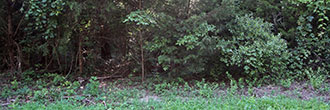 Wooded Property with Water and Electricity 90 Minutes from Dallas