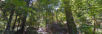 Forested Sloped Property Close to Town