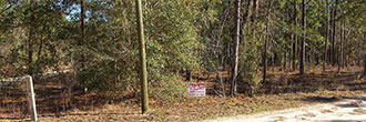 Treed Lot Just Under an Acre