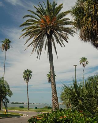 Cheap-Florida-Land