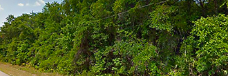 Florida Acreage with Excellent Access