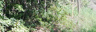Large Acreage in Central Florida