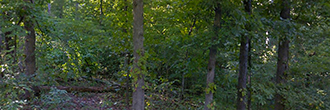 Wooded Property in Northern Arkansas