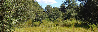 1 Acre Southwest of Jacksonville City Limits