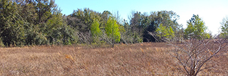 Flat, Grassy Property in Sunny Florida
