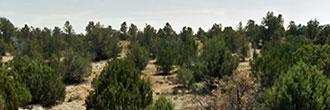 Rural Residential Arizona Land