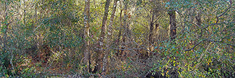 Almost One Half Acre Residential Property in Interlachen