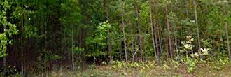 Seneca South Carolina Acreage With Partial Waterfrontage