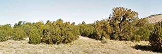 2 Acres Await in this High Desert Paradise