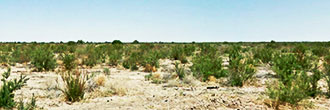 Huge 40 Acre Escape in Rural Arizona