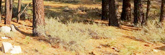 Gorgeous California Retreat Hiding in Plumas County