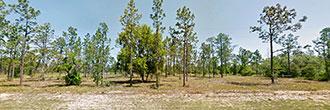 Beautiful 1 Acre Plot in Sunny Florida